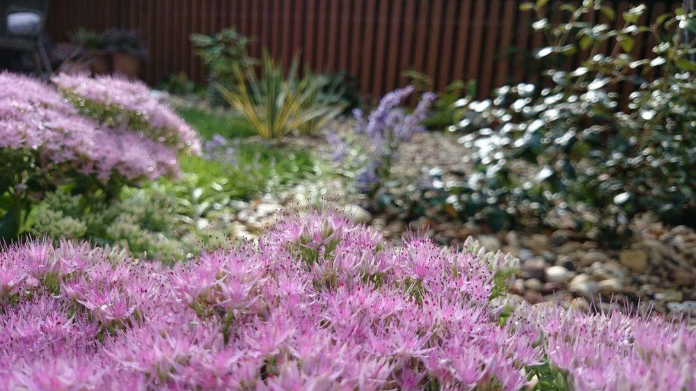 Garden Around The Terrace   Small Urban Back Graden ...